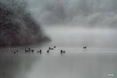 matin de givre (akakus55) Tags: étang canards givre