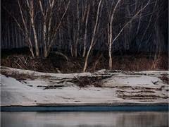 TASSONI MASSIMO (Tassoni Massimo) Tags: alberi albero paesaggio paesaggi photoart photo photoshop paysage plants