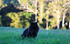 Farm Maxi (Bens-Lens) Tags: bellthorpe farm sunshinecoast moretonbayshire qld queensland cats cat pussy wetpussy