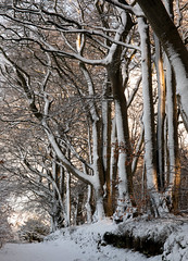 A Winter Day (PeskyMesky) Tags: aberdeen lochside bridgeofdon woods wood forest snow february 2019 landscape canon canon5d eos