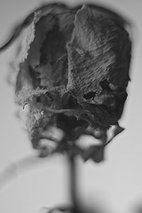 Changes... (An Occasional Dream) Tags: blackandwhite decay beautyofdecay nature photography monochromatic flickr noir