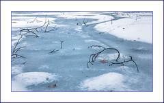 River of Ice (Timothy Valentine) Tags: 0219 52weeks frozen home outback 2019 ice eastbridgewater massachusetts unitedstatesofamerica us week72019 startingtuesdayfebruary122019 52weeksthe2019edition