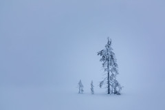 Friends in Fog (Lars Øverbø) Tags: tree trees fog winter norge norway minimalistic canon24105f4lis canoneos5dmarkiv