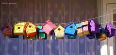 More than a (one) home (Ineke Klaassen) Tags: tolhuis dukenburg nijmegen flat bird birdhouse vogel vogels vogelhuis vogelhuisje birdhouses washingline waslijn nederland netherlands sony sonyimages sonya6000 sonyalpha sonyalpha6000 sonyilce6000 colour color colourful colorful balcony balkon house home gelderland birdcondominiums 50fav 50favs 50faves 50100fav 5075fav 1000views 70favs 70faves 70fav 75faves 75fav 75favs 75100fav