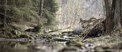 Near and far (mexou) Tags: mexou luxembourg gouschtengerbaach water creek beck box hidden treasure spruce wood forest