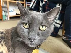 Bonkers on the Occasion of his 19 1/2th Birthday (sjrankin) Tags: 15march2019 edited animal cat closeup kitahiroshima hokkaido japan bonkers birthday 1912 livingroom floor