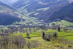 IMGP2878 (petercan2008) Tags: pueblo cantabria vega del pas verde green grass hierba village trees arboles españa spain