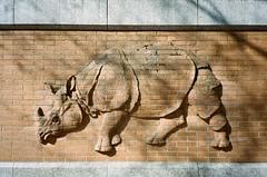 Berlin (iampaulrus) Tags: berlin germany mjuii olympusmjuii lomography portra kodak film filmphotography analog analogue 35mm 35mmfilmphotography film35mm art streetart rhino