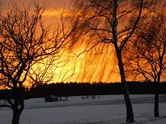 Sonnenuntergang (elisabeth.mcghee) Tags: sonnenuntergang sunset oberpfalz upper palatinate himmel sky wolken clouds landschaft landscape schneelandschaft winterlandschaft schnee snow birke birch scheune barn äste branches