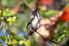 OC_Birds_12-24-18-5