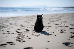 猫 (fumi*23) Tags: ilce7rm3 sony sel85f18 85mm fe85mmf18 a7r3 animal katze neko cat chat gato ocean sea ソニー ねこ 猫 bokeh depthoffield emount