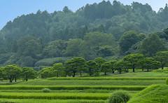 Shugakuin (Al Case) Tags: shugakuin imperial villa kyoto japan landscape rice paddy trees nikon d600 nikkor 24120mm f4g 修学院離宮 京都 al case