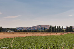 190128 095728 (Vibeke Friis) Tags: martinborough wellingtonregion newzealand nz