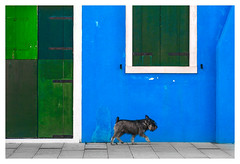 Burano streetlife (Blende1.8) Tags: burano dog dogs pet hund hunde venice venezia venedig italy italia italien bellaitalia street strase outdoor life blau blue green grün colors colorful colourful colour color colours vivid vividcolors door window windows fenster tür doors building facade fassade