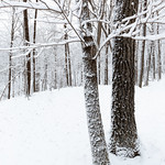 A Winter Hymn for Two thumbnail