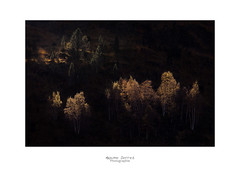 Sombrer (MaxSerres) Tags: photo2018 ariège paysage automne arbre contrejour