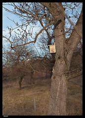 Roz 2019 (7) (***RM***) Tags: czechrepublic moravia zidlochovice country nature walk winter february nikon d850 nikkor 2470mm