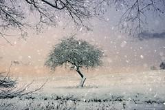 Candy coloured (Rita Eberle-Wessner) Tags: winter snow schnee baum tree landschaft landscape candycoloured schneeflocken snowflakes odenwald