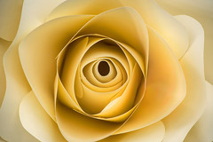 Imination Rose Macro 3-0 F LR 2-15-19 J122 (sunspotimages) Tags: rose roses flower flowers imitation imitationrose imitationroses imitationflower imitationflowers paper paperflower paperflowers paperrose paperroses nature artworkartwork artistic yellow yellowflower yellowpaperflower sepia sepiaflower sepiaflowers sepiaimitationflower sepiaimitationflowers sepiarose sepiaroses sepiapaperflowers yellowimitationflower yellowimitationflowers yellowpaperflowers