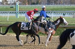 "2016-11-06 (99) r5 Jevian Toledo on #2 Great Smoke (JLeeFleenor) Tags: photos photography md maryland marylandracing marylandhorseracing equine laurelpark laurelracecourse outside outdoors jockey جُوكِي ""赛马骑师"" jinete ""競馬騎手"" dżokej jocheu คนขี่ม้าแข่ง jóquei žokej kilparatsastaja rennreiter fantino ""경마 기수"" жокей jokey người horses thoroughbreds equestrian cheval cavalo cavallo cavall caballo pferd paard perd hevonen hest hestur cal kon konj beygir capall ceffyl cuddy yarraman faras alogo soos kuda uma pfeerd koin حصان кон 马 häst άλογο סוס घोड़ा 馬 koń лошадь"