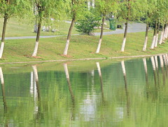 Iteration of trees and reflections along river in Chinese public park of Hefei (Germán Vogel) Tags: swanlake waterreflection iteration pattern publicpark park trees river green chineseculture asia eastasia china travel traveldestinations tourism touristattractions landmark holidaydestination famousplace hefei anhuiprovince