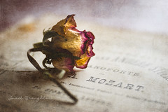 Rose, Faded {Textured} (Janet_Broughton) Tags: lensbaby velvet85 sonya99 rose dead dried textured music