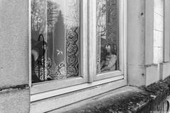 La jeune fille au perroquet (BenoitGEETS-Photography) Tags: sony a6000 younglady jeunefille fenêtre windows parrot perroquet noiretblanc nb bn bw virton rideau curtain