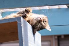 Alles eine Frage der Perspektive (Jana`s pics) Tags: katze hauskatze cats tiere animals pets haustiere perspektive hangaround abhängen animalphotography tierfotografie tierschutz karlsruhe