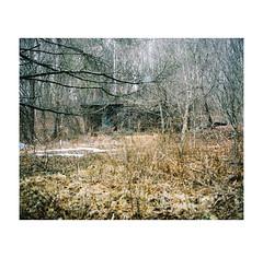 #0183 (Masami H.) Tags: 6x7 film analog mediumformat mamiya7ii kodak portra landscape snow