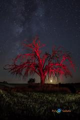 Noche_de_miedo (Pablo y Julián) Tags: nikond7500 nocturna arbol pintar lightpainting