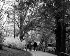 Father and son (v o y a g e u r) Tags: father pere son fils noir black blanc blackandwhite noiretblanc parc walking monochrome blanco negro white observation