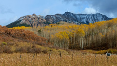 Everywhere I go I find a poet has been there before me… (ferpectshotz) Tags: ridgway colorado autumn fall colors fallfoliage mountains sanjuanmountains lastdollarroad rockies rockymountains aspens trees rural countryroads