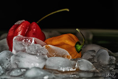 Scotch on the rocks (PhilR1000) Tags: macromondays hotorcold ice scotchbonnets red yellow bonneypeppers chilipepper caribbeanredpeppers