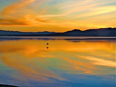 salton sea sunset , California (moonjazz) Tags: nature california saltonsea color photography water reflection sky gold serenity desert environment beauty calm sunset dusk moonjazz mountains southern birds eternity magic blue canon clouds flckr amazing best light