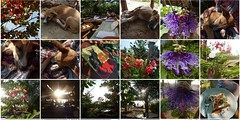 chezchristophe1 (belight7) Tags: chez christophe gokarna restaurant beach india south cafe mosaic collage french food