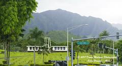 OAHU-HAWAII_1D52163-01 (Donna Molinari Photography) Tags: sanjose ca usa