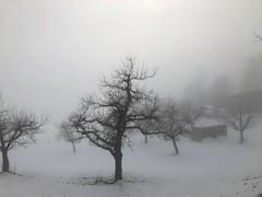Wintertag an der Nebelgrenze (Obstbäume im Nebel) (Martinus VI) Tags: hivers winter winterlandschaft wintertag emmental kanton de canton bern berne berna berner bernese schweiz suisse suiza switzerland svizzera swiss y190202 fog brouillard brume nebuleuse mist nebula nebbia bruma niebla nebel