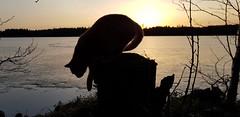 #Sunset mit #Katze #Yoda