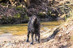 20190215-IMG_8722 (Alderbabbsack) Tags: struppi hund