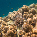 Underwater world. Coral reefs of Thailand         IMG_3481BS