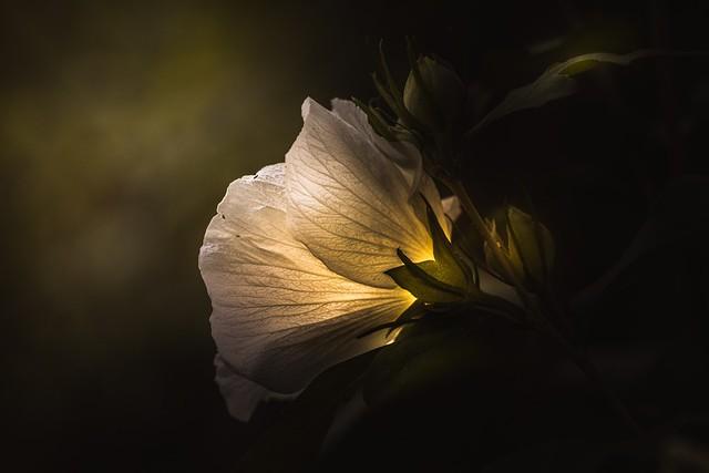 Обои цветок, свет, фон, темно зеленый картинки на рабочий стол, раздел цветы - скачать