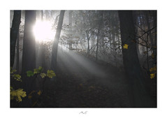 Glow in the Dark (Max Angelsburger) Tags: dark wood light beams tyndall rays fog mist tree branches leaf glow moody badenwürttemberg herbst autumn 2018 nakedplanettheglobewandererroamtheplanetfantasticearthawesomeearthpixearthfocuscolorsofdayvisualambassadorsnaturewizardsphotorupt