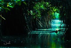 #pichavaram (Jansha Crazy) Tags: pichavaram bird nature water