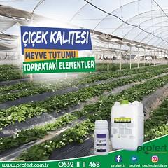 profert mans (Profert Gübre) Tags: çilek tarım tarlabitkileri tarla toprak tabangübre fertilizer profert afet