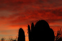 Sunset 2 16 19 #39 (Az Skies Photography) Tags: rio rico arizona az riorico rioricoaz canon eos 80d canoneos80d eos80d canon80d cloud clouds red orange yellow gold golden salmon black february 2019 sky skyline skyscape arizonasky arizonaskyline arizonaskyscape sun set sunset dusk twilight nightfall arizonasunset 16 february162019 21619 2162019 silhouette cactus prickly pear pricklypear pricklypearcactus cactussilhouette