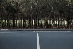 middle of the road (jhnmccrmck) Tags: road park pavement middleoftheroad melbourne victoria docklands fujifilm fujifilmxt1 xt1 classicchrome street trees