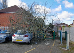 Ouch ! (karl from perivale) Tags: car carpark park house gate clouds sky outdoor trees tree damage ealingcentralsportsground medwayvillage perivale greenford ealing london uk gb