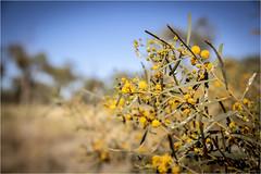 Kata Tjuta . Desert Trekking (:: Blende 22 ::) Tags: trekking desert bush australia australien nothernterritory outback olgas katatjuta redrocks redcentre rocks bluesky canoneos5dmarkiv ef2470mmf28liiusm