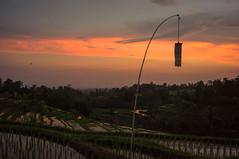 (kuuan) Tags: manualfocus mf voigtländer15mm cvf4515mm 15mm bali indonesia sonynex5n sunset ricefield reflection colorful