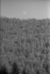 (Silvia Kuro) Tags: moon luna pagan landscape mountain mountains montagna wood woods trees dark fine art 35mm film analog analogue analogic analogico analogica fotografia paesaggio nature natura boschi forest alberi bw black white cinestill bwxx